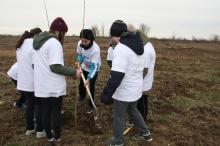 A dobrácsapáti önkéntesek nyárfát ültetnek (Fotó: APM).